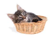 El gatito se sienta en la cesta Fotos de archivo libres de regalías