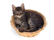 El gatito se sienta en la cesta Fotos de archivo