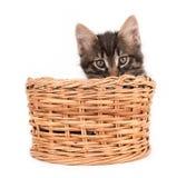 El gatito se sienta en la cesta Foto de archivo