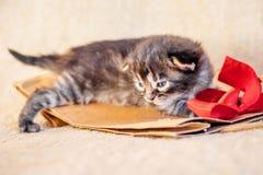 El gatito se sienta en paquetes del rojo-cuenco Regalo de cumpleaños maravilloso sorpresa imágenes de archivo libres de regalías