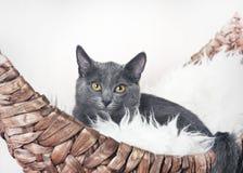 El gatito se sienta en su sofá-barco Fotos de archivo libres de regalías