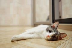 El gatito soñoliento miente en de madera a un piso fotos de archivo