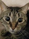 El gato foto de archivo libre de regalías