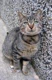 El gato Imagen de archivo libre de regalías