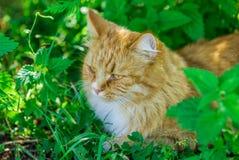 El gato Fotos de archivo