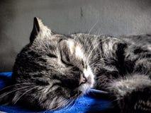 El gato Imágenes de archivo libres de regalías