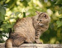 El gato adorable con la capa peluda se sienta en la cerca fotografía de archivo libre de regalías
