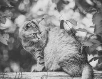 El gato adorable con la capa peluda se sienta en la cerca imagen de archivo libre de regalías