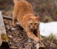 El gato afila garras fotos de archivo