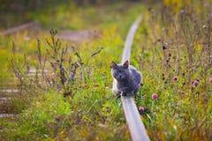 El gato alarmado que se sienta en los carriles Imagen de archivo libre de regalías