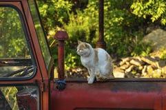 El gato amarillo blanco se sienta en un tractor rojo en naturaleza Animal dom?stico outdoor imágenes de archivo libres de regalías