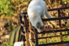 El gato amarillo blanco se sienta en un tractor rojo en naturaleza Animal dom?stico outdoor imagen de archivo