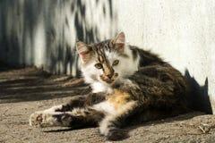 el gato Amarillo-observado tomó el sol en el sol cerca de la casa fotos de archivo libres de regalías