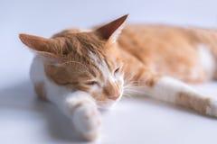 El gato anaranjado es soñoliento y mirada presuntuoso imagen de archivo