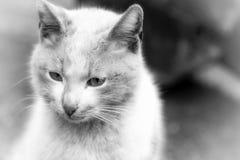 El gato animal del animal doméstico Foto de archivo