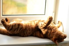 El gato animal goza el mentir en el sol foto de archivo