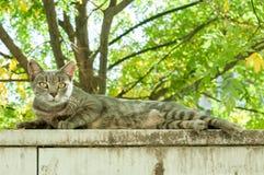 El gato asustado mira en la cámara mientras que ella descansa sobre la pared del jardín Imagen de archivo libre de regalías