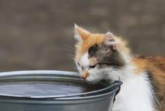El gato bebe el agua de un l grande cubo Foto de archivo