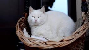 El gato blanco bosteza en una cesta delante de la casa almacen de metraje de vídeo