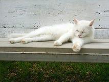 El gato blanco en banco Fotografía de archivo