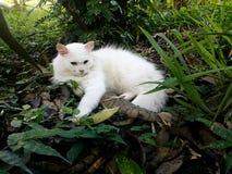 El gato blanco es sueño Imagen de archivo