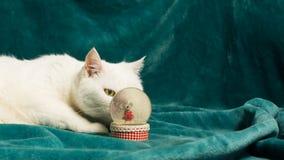 El gato blanco está estando al acecho detrás de una bola de nieve cristalina Foco selectivo fotos de archivo libres de regalías