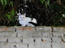 El gato blanco-negro dulce en el top de la pared Foto de archivo libre de regalías