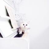 El gato blanco se escabulle en las llaves del piano Imagen de archivo