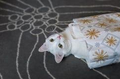 El gato blanco subió en el bolso Imagen de archivo