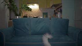 El gato blanco vio la TV y sale del sof? 4K almacen de video