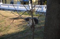 El gato blanco y negro se sienta en las ramas de un árbol en la sombra en un fondo de la hierba amarilla imagenes de archivo