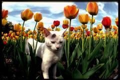 El gato botánico Imagen de archivo