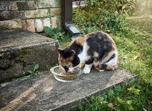 El gato come Fotos de archivo libres de regalías