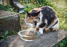 El gato come Imagenes de archivo