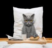 El gato come en cama y bebida Fotos de archivo libres de regalías