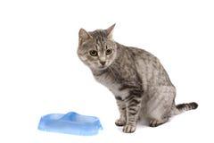 El gato con el tazón de fuente vacío cadge la comida. imagen de archivo