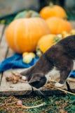 El gato con las verduras foto de archivo