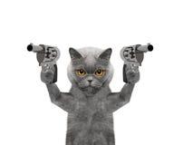 El gato con los armas es asesino Imagen de archivo libre de regalías