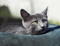 el gato con los ojos verdes está en el sombrero Fotos de archivo