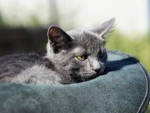 el gato con los ojos verdes está en el sombrero Foto de archivo