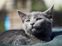 el gato con los ojos verdes está en el sombrero Foto de archivo libre de regalías
