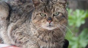 El gato con los ojos verdes me mira Foto de archivo