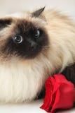 El gato con se levantó Imagenes de archivo