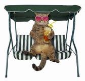 El gato con té frío está en un banco del oscilación fotografía de archivo
