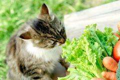 El gato conoce cuál es comida sana Foto de archivo libre de regalías
