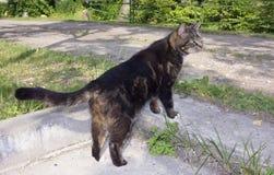 El gato curioso del pueblo mira el camino y espera a su dueño Foto de archivo