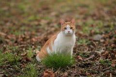 El gato curioso divertido le gusta un jefe fotos de archivo