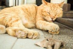 El gato de gato atigrado anaranjado hermoso precioso adorable fascinante que dormía con sus ojos cerrados en el otoño de la calle fotos de archivo libres de regalías