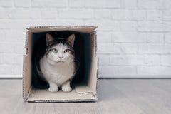 El gato de gato atigrado se sienta en una caja y miradas del lcardboard a la cámara imagen de archivo