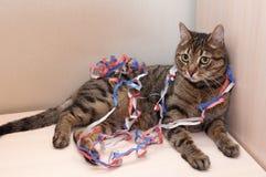 El gato de gato atigrado miente las decoraciones serpentinas en espiral de la Navidad Imagenes de archivo